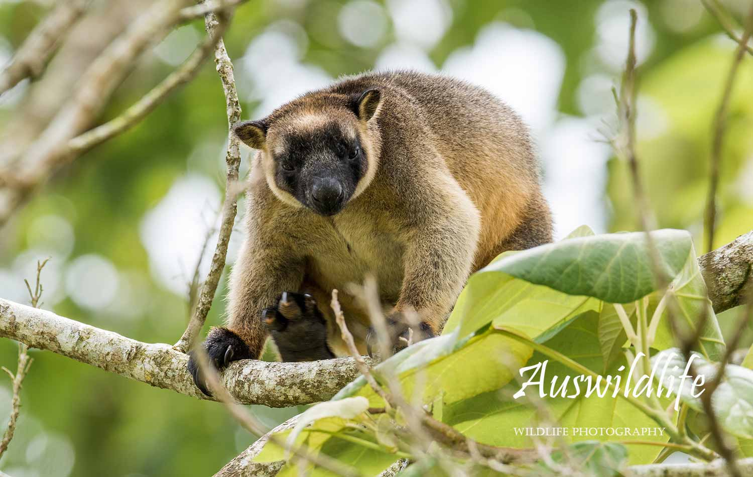 Australian wildlife stock photography