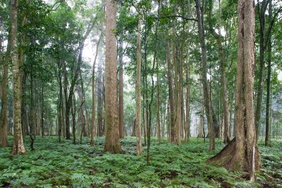 Forest, Bunya Mountains, Qld. Australian landscapes, images