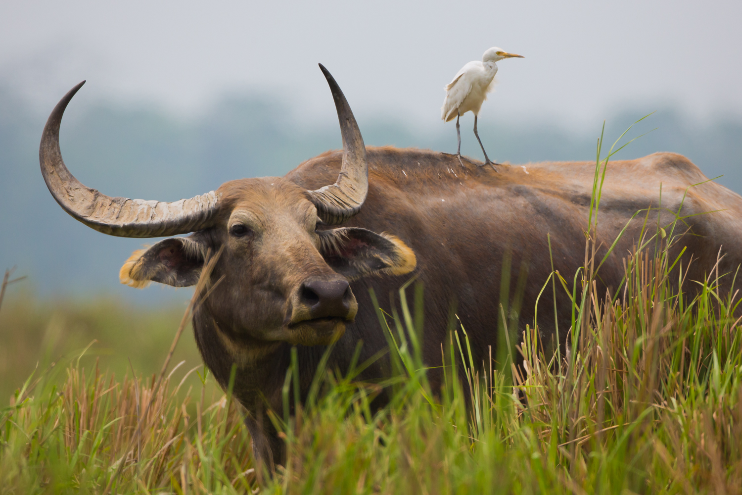 Indian wildlife photography, birds, animals and reptiles