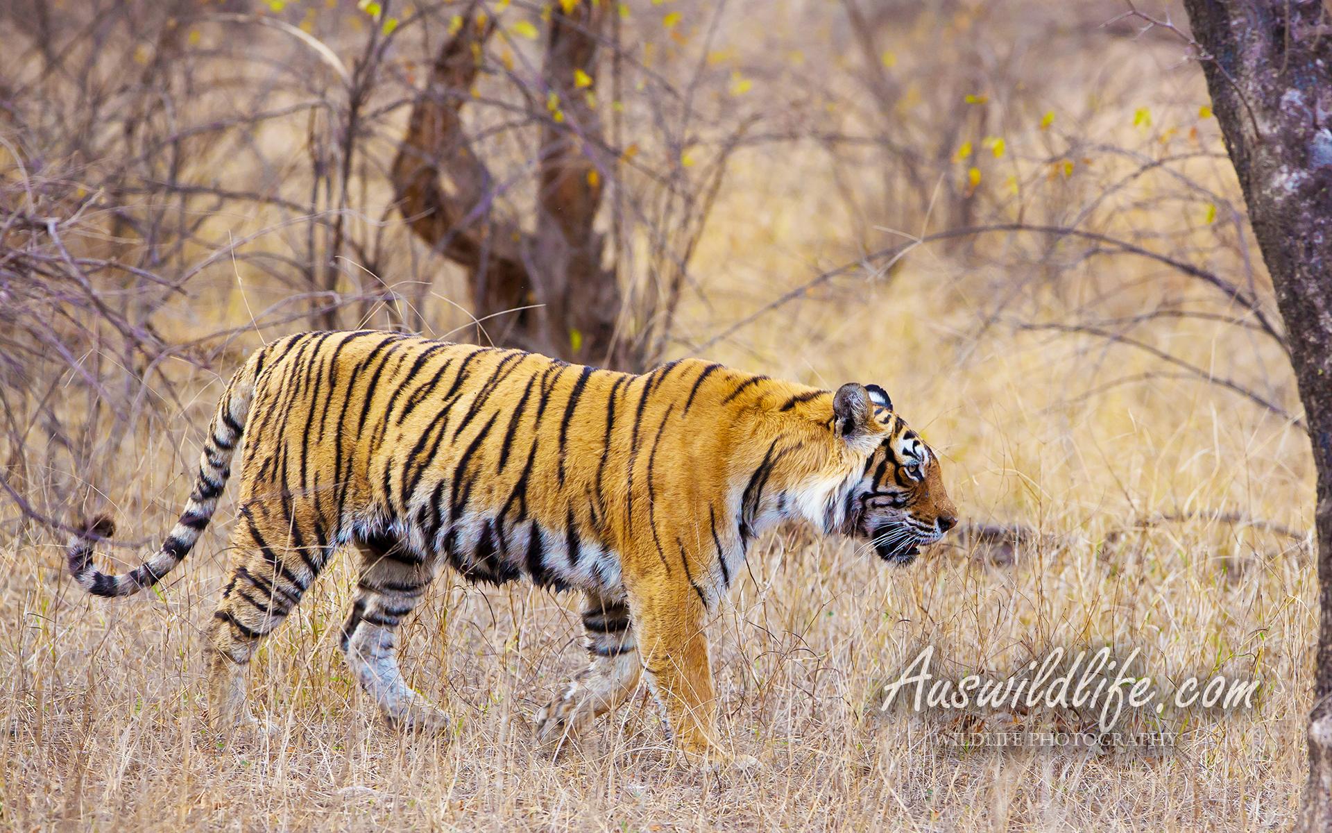 Wildlife Stock Images Photos