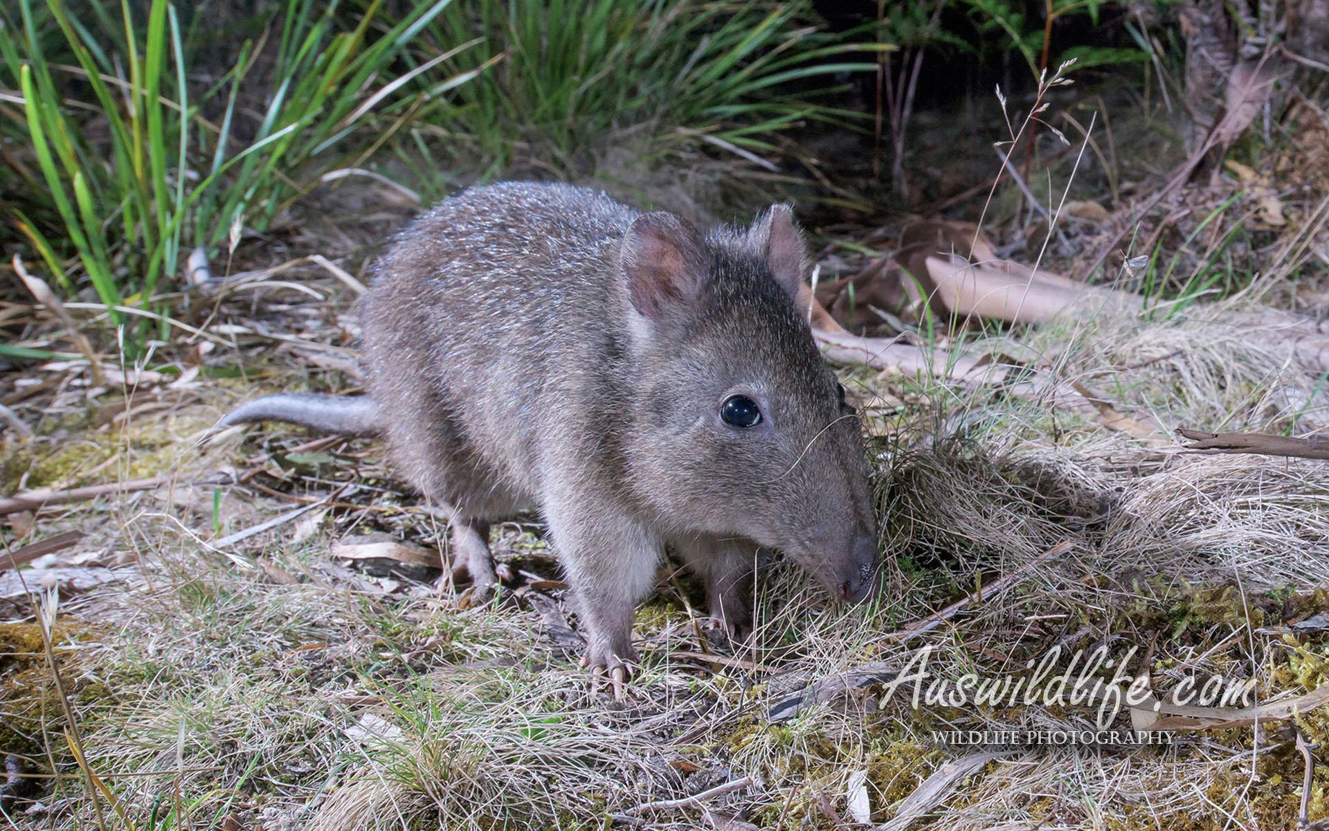 Australian Wildlife Stock Images